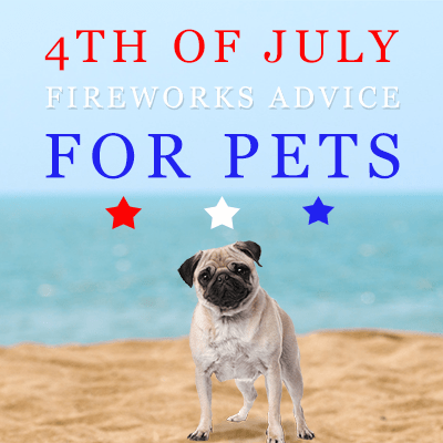 4th of July Fireworks Advice For Pets: Love 'em Don't Leave 'em!